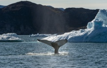 Whale Watching and UNESCO Icefjord hike